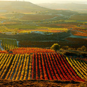 Wines of Andalucia